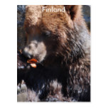 Brown Bear in Finland Postcard