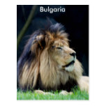 Bulgaria Lion Postcard