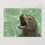 Chatty Sea Lion Postcard