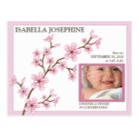 Cherry Blossom Baby Girl Birth Announcement: pink Postcard