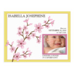 Cherry Blossom Baby Girl Birth Announcement yellow Postcard