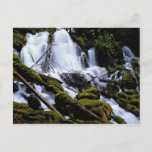 Clearwater Falls, Umpqua National Forest, Oregon, Postcard