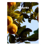 Cyprus Lemon Grove Postcard
