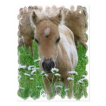 Foal Smelling Daisies Postcard