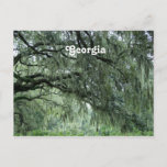 Georgia Trees Postcard