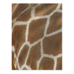 Giraffe Patterned Postcard