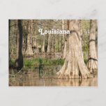 Louisiana Swamp Postcard
