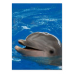 Lovable Dolphin Postcard