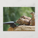 Prairie Dog Soldiers Postcard