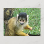 Squirrel Monkey Postcard