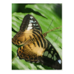 Winged Butterfly Postcard